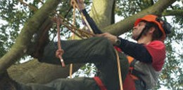 course_tree